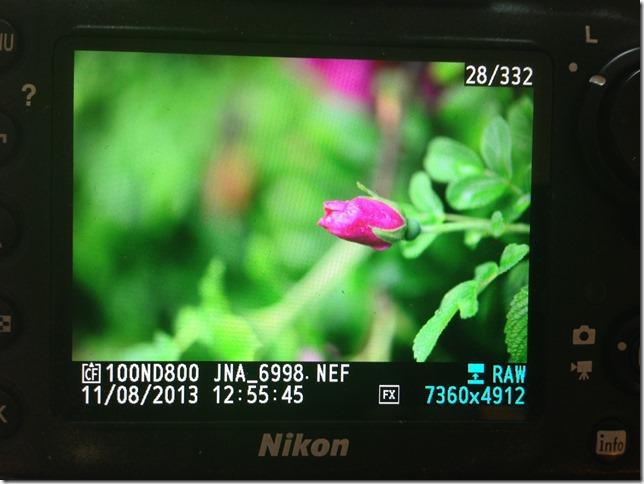photo (57)